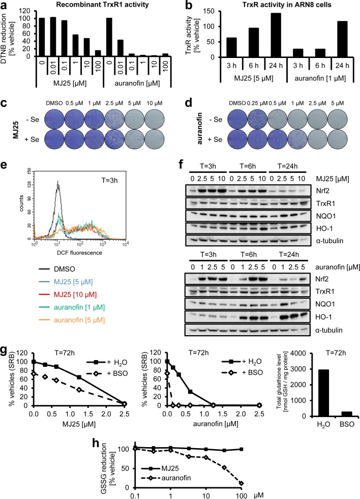 MJ25 is an inhibitor of thioredoxin reductase 1 (TrxR1) a. The capability of MJ25 and auranofin to inhibit recombinant, rat-derived TrxR1 in vitro was measured by an <t>NADPH</t> dependent 5,5′-dithiobis-[2-nitrobenzoic acid] (DTNB) assay. b. ARN8 cells were treated with MJ25, auranofin or DMSO, respectively, for the indicated periods of time. TrxR1 inhibition was subsequently assessed in cell lysates by an NADPH and Trx dependent insulin reduction endpoint assay, measuring thiol formation using DTNB. Ratios between MJ25 and DMSO as well as auranofin and DMSO were determined for each point in time. (c and d) ARN8 cells were treated with c. MJ25 or d. auranofin, while in each half of the samples growth media were supplemented with sodium selenite [75 nM] three days prior to seeding as well as during seeding and treatment for 72 hours. Cell viability and clonogenic capacity were determined. e. ROS levels were determined in ARN8 cells 3 hours after the indicated treatment by measuring fluorescence of 2′,7′-dichlorofluorescein (DCF). f. Induction of anti-oxidative proteins by MJ25 and auranofin was investigated in ARN8 cells at the indicated points in time by Western blotting. DMSO served as vehicle control (0 μM). g. ARN8 cells were pre-treated with L-buthionine sulfoximine (BSO) or vehicle (H 2 O) for 72 hours, upon which cells were re-plated in BSO- and vehicle-free growth medium. Cell viability was assessed by SRB assay after 72 hours in the presence of vehicle (DMSO), MJ25 (left panel) or auranofin (middle panel), respectively. Intracellular glutathione (GSH) levels were determined 72 hours after BSO / vehicle treatment (right panel). h. Inhibition of yeast-derived glutathione reductase by MJ25 and auranofin was determined in vitro by measurement of glutathione disulfide (GSSG) reduction.