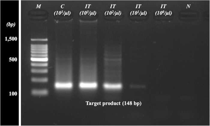 Agarose gel electrophoresis of the amplified HIV gag gene (148 bp) prepared by a general <t>gDNA</t> extraction and on-chip process. The integrated chip could successfully extract the HIV proviral <t>DNA</t> from infected cell populations as low as 10 2 /μl in the blood sample. Lanes: M, molecular weight standard; C, PCR product by chemical method; IT, PCR product by IT chip with respect to sample population; N, negative control.