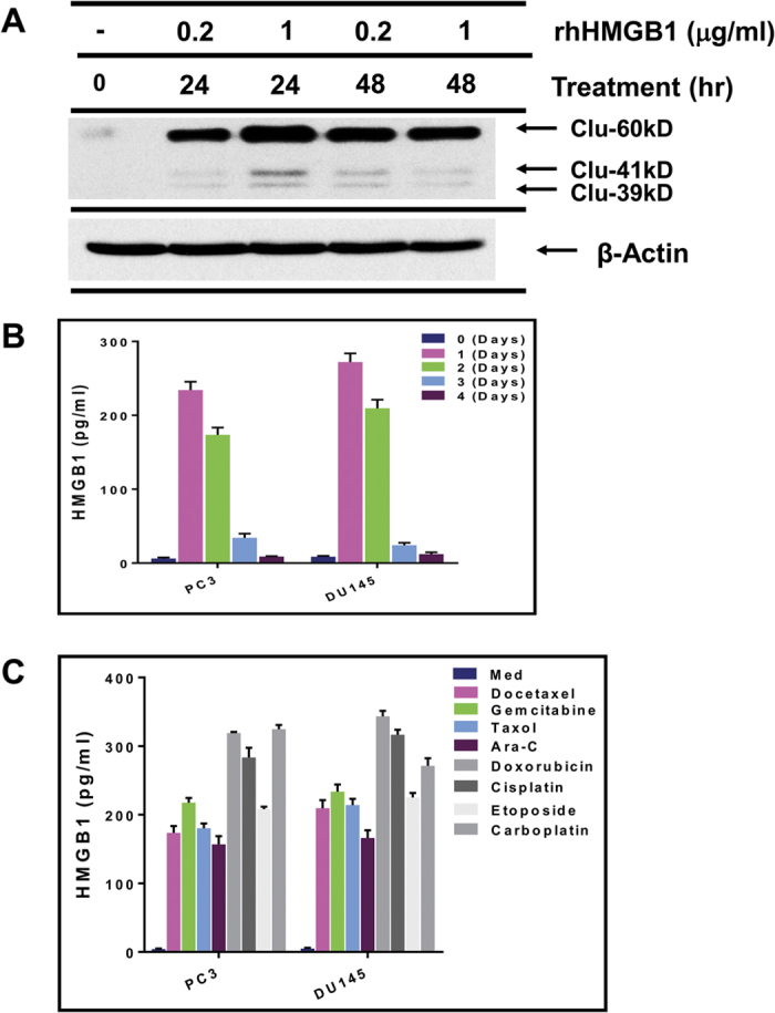 HMGB1 induces clusterin from tumor cells and is released by dying tumor cells. ( A ) DU145 prostate tumor cells, incubated with recombinant human HMGB1 (rhHMGB1) for 24–48 h, were lysed and analyzed by western blot for presence of clusterin, and for β-actin for equal loading. ( B ) DU145 tumor cells were treated with docetaxel (DTX) for 1–4 days and their supernatants were evaluated for HMGB1 by ELISA. ( C ) DU145 tumor cells were treated with the indicated chemotherapeutic agents for 24 h and the supernatants analyzed for HMGB1.