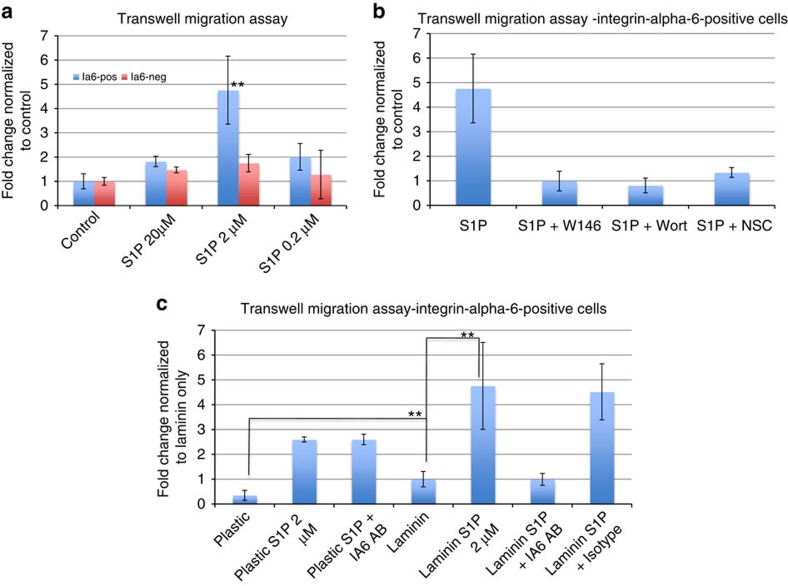 The migration of integrin alpha-6-positive germ cell precursors towards sphingosine-1-phosphate is mediated by the G-protein–coupled receptor S1PR1 and integrin alpha-dependent binding to laminin. ( a ) Migration assay of ALDH-positive cells in response to different concentrations of S1P, as indicated. No stimulant was added to control wells. Sorted cells were added to the upper chamber of a Transwell system coated with laminin, and after 2 h, migrated cells in the lower chamber were counted. Data are expressed as fold changes of numbers of migrated cells, normalized to unstimulated controls ( n =6). Statistical analysis was performed using Student's t -test. ** P ≤0.05 (medium significance compared with control). ( b ) Migration assay of ALDH-positive/Integrin-alpha-6-positive cells in the presence of 2 μm S1P with or without inhibitors of S1PR signalling. S1PR1 antagonist W146 (10 μM), PI3K-inhibitor Wortmannin (0.1 μM) or Rac1-inhibitor NSC (100 μM) were added as indicated. Data are expressed as fold changes of numbers of migrated cells, normalized to unstimulated controls. ( c ) Migration assay of ALDH-positive/integrin alpha-6-positive cells on uncoated plastic or laminin-coated Transwells with or without 2 μm S1P. Anti-integrin alpha-6 (5 μg ml −1 ) or isotype control antibody was added as indicated. Data are expressed as fold changes of numbers of migrated cells, normalized to unstimulated controls on laminin. Error bars represent the standard deviation for each average ( n =6) Statistical analysis was performed using Student's t -test. ** P ≤0.05 (medium significance).