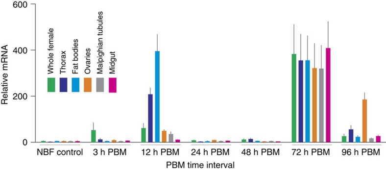 Aa Slif expression and regulation in selected mosquito tissues and organs. The transcript levels were determined using quantitative PCR (qPCR). The data represent relative quantities of Aa Slif transcript that were normalized with qPCR levels of ribosomal protein S7 (rpS7) mRNA in the same tissue sample set. Bars are means+s.e.m. for n =3 replicates collected from different sets of mosquitoes (analysis of variance followed by Tukey's HSD post hoc test). The RNA samples were isolated from whole body and various body parts and organs of adult female mosquitoes grouped as shown by the colour-coding insert. The horizontal scale indicates group-specific conditions: non-blood fed (NBF, control), 3, 12, 24, 48, 72 and 96 h post blood meal (PBM).