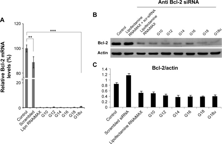 ( A ) Real-time polymerase chain reaction analysis and ( B ) representative Western blot analysis of the Bcl-2 gene expression in HeLa cells after transfection with NP-Bcl-2-siRNA. ( C ) Densitometry graph demonstrating Bcl-2 protein expression in HeLa cells post transfection with NP-Bcl-2-siRNA. Untreated and transfected with non-silencing siRNA serves as controls. Cells transfected with Lipofectamine 2000 served as the positive control. Data represented in the graph are expressed as a ratio to the control. All the data are normalized to the house-keeping gene β-actin. Notes: Values are mean ± standard deviation; n=3; *** P