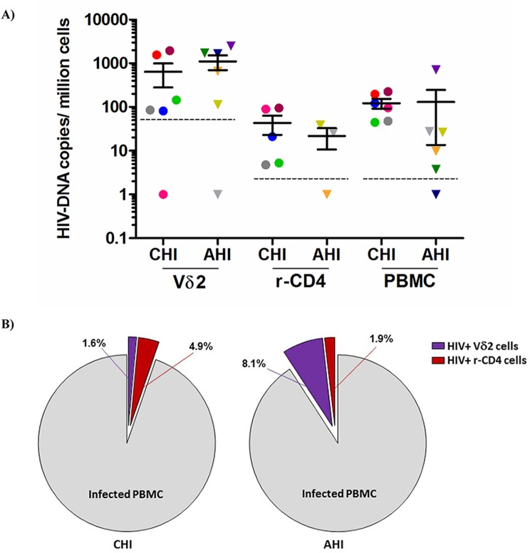 Quantification of total HIV DNA levels. A) Total pol HIV copies were quantified by ddPCR within Vδ2 cells (n = 12), total resting CD4 + T cells (r-CD4) (n = 8) and unfractionated PBMC (n = 12) from HIV-1 suppressed patients treated in the acute HIV infection (AHI) or in the chronic HIV infection (CHI). Limit of quantitation (LOQ) was 50.6 copies/ 10 6 Vδ2 cells and 5.1 copies/ 10 6 r-CD4 cells and PBMC, and is depicted with a dotted line. Each color represents one patient. B) Pie charts reflecting the contribution of Vδ2 cells (purple) and r-CD4 cells (red) to the total HIV DNA + PBMC in CHI patients (left pie) and AHI patients (right pie).