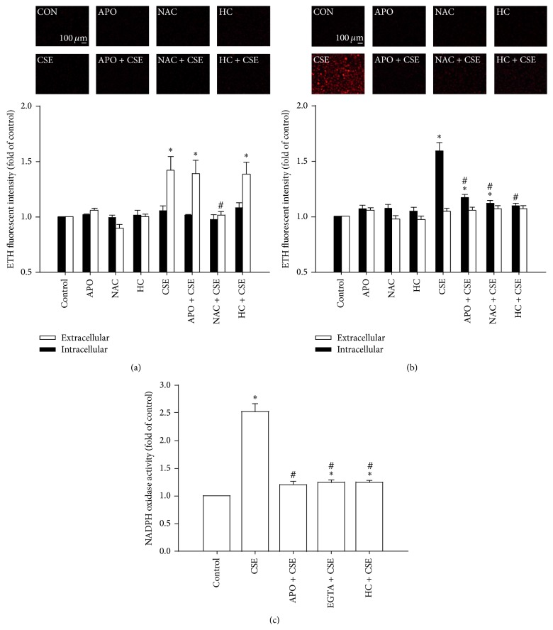 The CSE-induced extracellular ROS stimulate TRPA1 to Ca 2+ -dependently increase intracellular ROS via NADPH oxidase in HBECs. (a–c) Cells were exposed to medium alone or to 3% CSE for 2, 30, and 15 min, respectively, after pretreatment with apocynin (APO; an inhibitor of NADPH oxidase; 150 μ M), after pretreatment with N-acetyl-cysteine (NAC, a ROS scavenger; 1 mM), after pretreatment with HC-030031 (HC, a TRPA1 antagonist; 9 μ M), or after pretreatment with EGTA (an extracellular Ca 2+ chelator; 500 μ M). Levels of ROS were measured by HE fluorescent probe assay. NADPH oxidase activity was measured by NADP + /NADPH assay. Data in each group are mean ± SEM from five independent experiments. ∗ p