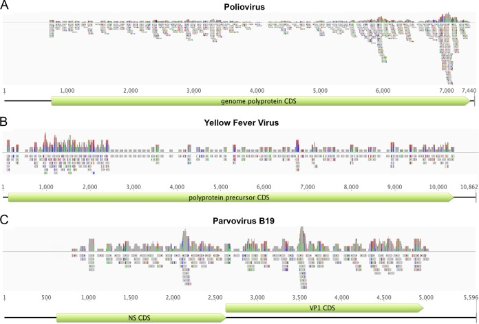In silico validation of the VirCapSeq-VERT probe design. Probe depth and coverage of the VirCapSeq-VERT probe library are shown for poliovirus (A), yellow fever virus (B), and parvovirus B19 (C). Virus genomes are represented by black lines. The coding sequences are represented by green boxes. The probes are indicated by grey boxes. The top graph in each panel indicates probe depth at each locus. Colored lines in the probes indicate mismatch to the reference used for alignment (green, A; red, T; blue, C; orange, G). Line heights in the coverage track above indicate frequency of the mismatched bases.