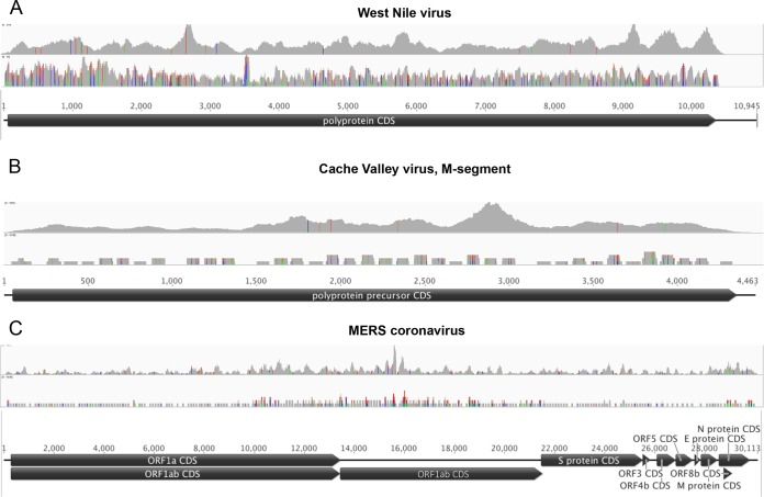 Read coverage versus probe coverage of VirCapSeq-VERT for West Nile virus (A), Cache Valley virus (B), and MERS coronavirus (C). Virus genomes are represented by horizontal black lines and coding sequence by black pointed boxes. The top graph in each panel indicates the read coverage obtained by VirCapSeq-VERT; probe coverage is shown below. Colored lines indicate mismatch to the reference used for alignment (green, A; red, T; blue, C; orange, G). Line heights indicate the frequency of the mismatched bases.