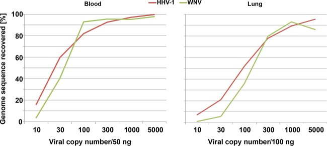 Limit of detection for VirCapSeq-VERT. Total nucleic acid from blood or lung tissue was spiked with human herpesvirus 1 (HHV-1) and West Nile virus (WNV) nucleic acid. The two preparations were serially diluted to generate six samples containing both viruses at 5,000, 1,000, 300, 100, 30, or 10 copies in 100 ng lung tissue or 50 ng whole-blood nucleic acid. Samples were processed with VirCapSeq-VERT.