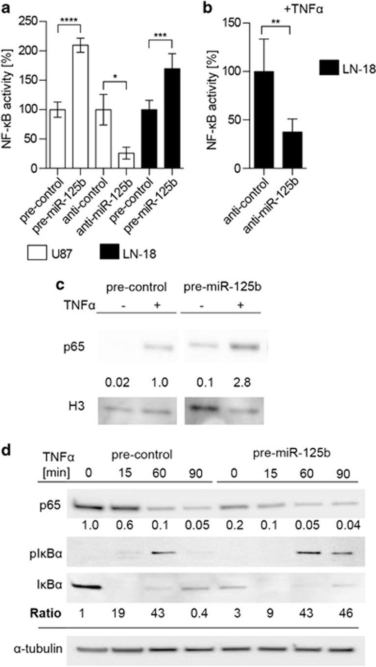 miR-125b induces NF- κ B activity. ( a ) NF- κ B reporter activity of GBM cells overexpressing miR-125b or anti-miR-125b relative to control cells ( n =6). ( b ) NF- κ B reporter activity of LN-18 cells overexpressing anti-miR-125b. Cells were induced with 10 ng/ml TNF α for 4 h beginning 20 h post transfection ( n =6). Expression of ( c ) nuclear p65 and ( d ) cytoplasmic p65, I κ B α and phospho I κ B α in LN-18 cells transiently transfected with pre-miR-125b or pre-control by Western blotting. Cells were induced with 10 ng/ml TNF α beginning at 48 h post transfection. The ratio of pI κ B α to I κ B α protein levels is presented below the corresponding Western blot