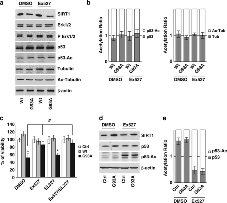 G93A-SOD1 toxicity is not mediated by p53 acetylation state or by IRS-2/Ras/ERK1/2 pathway in SH-SY5Y cells. ( a ) Western blot analysis of 20 μ M of total protein extract from cells infected with adenoviral vectors coding for Wt-SOD1 (Wt) and G93A-SOD1 (G93A) and treated with 3 μ M Ex527 or DMSO. Antibodies against SIRT1, Erk1/2, pErk1/2, p53, p53-Ac, tubulin and Ac-tubulin were used. β -Actin was used as loading control. One representative blot is shown from three independent experiments giving comparable results. ( b ) Densitometric analysis of results as in ( a ); data are expressed as acetylation ratio of p53 and tubulin. ( c ) Cells infected with adenoviral vectors coding for Wt-SOD1 (Wt) and G93A-SOD1 (G93A) were treated with 3 μ M Ex527 or with 3 μ M SL327 or both. Cell viability was assessed and reported for Figure 5a . Values significantly different from relative controls are indicated with * P