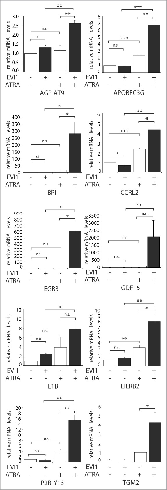 qRT-PCR confirms cooperative gene regulation by EVI1 and ATRA in U937 cells. RNA from U937_vec and U937_EVI1 cells that had been treated with solvent or ATRA for 24 h was reverse transcribed and subjected to qRT-PCR for the indicated genes. Gene expression relative to the housekeeping gene B2M and to solvent treated U937_vec cells was calculated using the ΔΔ Ct method. 88 Results represent means + SEs from at least 3 independent experiments; all of these were also independent of the microarray experiments. In the absence of ATRA, TGM2 mRNA levels were below the detection limit. Significance was calculated using Student's 2-tailed t-test (*, P