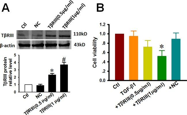 Overexpression of TβRIII contributes to the decrease in the viability of CAL-27 cells by TGF-β1 treatment CAL-27 cells were transfected with plasmid encoding TβRIII at concentrations of 0.5 μg/ml and 1 μg/ml. NC represents empty vectors (1 μg/ml of <t>pc-DNA3.1</t> plasmid) transfected into CAL-27 cells, which serves as an NC. After TβRIII overexpression for 24 h, CAL-27 cells were further incubated with 10 ng/ml TGF-β1 for 72 h. ( A ) TβRIII expression as determined by western blot analysis and the averaged band intensities from three independent experiments are presented. ( B ) Relative cell viability as determined by MTT assay. Data is presented as the rate (%) of growth control (viability of control) cultured in growth medium without transfection. Abbreviations: Ctl, control; +NC, empty vector transfection + TGF-β1 48 h; +TβRIII, TβRIII transfection + TGF-β1 48 h. Data are expressed as the mean ± S.D. from three independent experiments ( n =3). * P