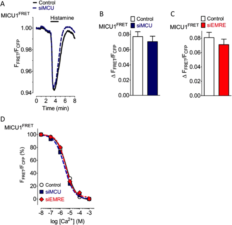 The Ca 2+ -induced rearrangement of MICU1 multimers is independent of the expression level of MCU and EMRE. ( A ) Average curves of MICU1 FRET ratio signals over time in response to 100 μM histamine in Ca 2+ -free solution of control HeLa cells (black curve, n = 23) and cells treated with siRNA against MCU (blue curve, n = 22). ( B ) Bars represent maximal ∆ MICU1 FRET ratio values (mean ± SEM) extracted from curves shown in panel A. ( C ) Bars represent maximal ∆ MICU1 FRET ratio values upon cell treatment with 100 μM histamine in Ca 2+ -free solution of control HeLa cells (white column, n = 19) and cells treated with siRNA against EMRE (red column, n = 12). ( D ) Concentration response curves showing the effects of different Ca 2+ concentrations on the MICU1 FRET ratio in ionomycin- (3 μM) treated control HeLa cells (black curve, white circles, n = 7–9), cells reduced of MCU (blue dotted curve, blue filled squares, n = 8–10), and cells reduced of EMRE (red dotted curve, r ed filled rhombs, n = 10).
