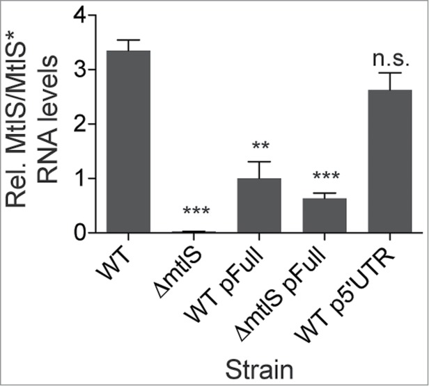 An antisense RNA is transcribed from pReporterFull. Strains of V. cholerae were cultured in M9 minimal medium with glucose (0.4%), at 37°C to an OD 600 of 0.3. Expression from the mtlS promoter should be high under these conditions. qRT-PCR was used to measure the MtlS/MtlS* transcript levels of WT (wild type), Δ mtlS , WT harboring pFull (pReporterFull), Δ mtlS harboring pFull, and WT harboring p5′UTR (pReporter5′UTR) strains of V. cholerae . The relative abundance of MtlS/MtlS* transcript was determined as described in Materials and Methods. Shown are the means and standard deviations from at least 3 independent samples. n.s., p > 0.05; ** p
