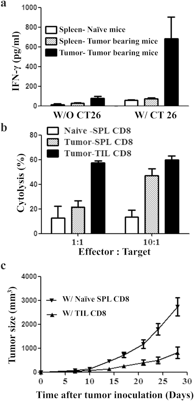 Tumor infiltrating CD8+ T cells are functionally active and inhibit tumor growth in mouse CT26 colon tumor model. CT-26 tumor cells were inoculated in BALB/c mice and tumor-infiltrating CD8+ T cells were sorted on day 28- post tumor inoculation. ( a ) Tumor-infiltrating CD8+ T cells secrete IFN-γ following culture with irradiated CT-26 tumor cells. Splenic CD8+ T cells from the tumor-bearing mice secrete minimum IFN-γ. ( b ) Both tumor-infiltrating and splenic CD8+ T cells of tumor-bearing mice execute cytolysis activity on CT26 tumor cells in vitro . The effect is higher by tumor-infiltrating compared to splenic CD8+ T cells. Splenic CD8+ T cells from naïve non tumor-bearing mice execute minimum cytolysis, served as control. ( c ) Upon adoptive transfer in another tumor-bearing mice, the tumor-infiltrating CD8+ T cells inhibit tumor growth. Transfer of naïve CD8+ T cells from spleens of non tumor-bearing naïve mice served as control. Data are mean ± SD of at least 3 similar experiments.