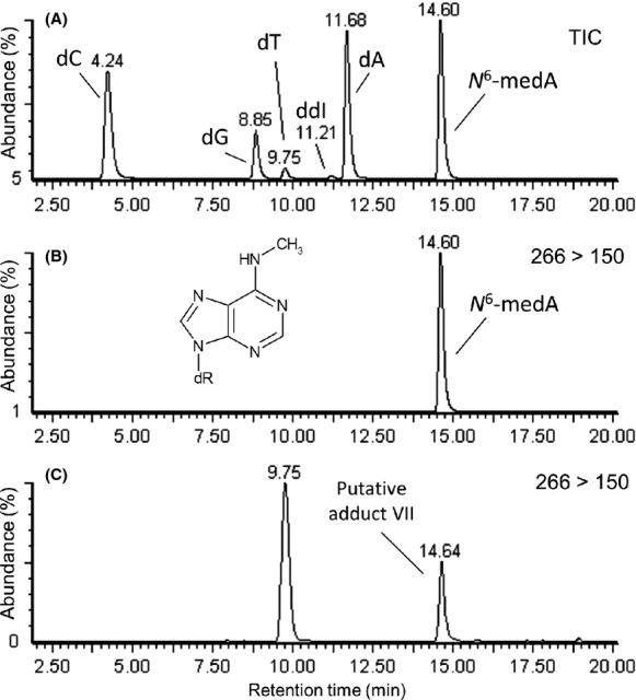 (A) LC separation of a mixture of authentic standards of 2′-deoxynucleosides 2′-deoxycytidine, 2′-deoxythymidine, <t>2′-deoxyguanosine,</t> 2′-deoxyadenosine and N 6 -methyl-2′-deoxyadenosine plus dideoxyinosine (dC, dG, dT, dA, N 6 -medA and ddI respectively). (B) N 6 -methyl-2′-deoxyadenosine detected by LC/ESI(+)-MS/MS SRM mode at transition 266 > 150, and (C) putative DNA adduct VII detected by LC/ESI(+)-MS/MS SRM mode at transition 266 > 150. The peak that was detected at 9.75 min occurred due to the abundantly detected sodiated ion of 2′-deoxythymidine which was detected at SRM transition 265 > 149. LC/ESI (+)-MS/MS, liquid chromatography electrospray ionization-tandem mass spectrometry in positive ionization mode; SRM, single reaction monitoring.