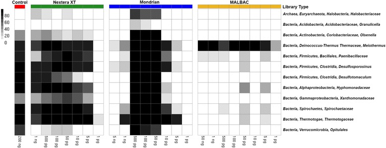 Heatmap noting the completeness of genomic bins extracted from each of the low input metagenomes. The color bar on top of the figure refers to each of the three tested library types and control library (Control = red, <t>Nextera</t> XT = green, Mondrian = blue and MALBAC = yellow). Samples are also arranged where the highest input quantity is located on the left side of each library type