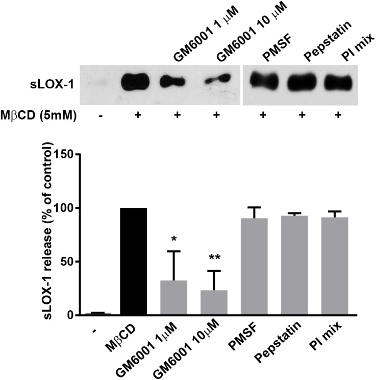 Western blot of sLOX-1 released from cells treated with MβCD and different protease inhibitors. LOX-1-V5-COS transfected cells were incubated with MβCD, GM6001, PMSF, <t>Pepstatin</t> A and the protease inhibitor cocktail (PI mix) (Calbiochem), as indicated (upper panel). Histogram shows the densitometric analysis expressed as percentage of reduction of sLOX-1 released in the presence of different protease inhibitors. 100% refers as sLOX-1 released in the presence of 5mM MβCD for 30 min (lower panel). Data in histograms represent the average ± SEM of three experiments, P