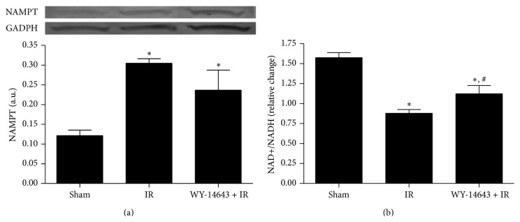 Effect of WY-14643 administration in NAMPT protein expression and NAD + /NADH levels. (a) Western blot and densitometric analysis of NAMPT. (b) Photometric analysis of NAD + /NADH levels in steatotic livers after 24 hours of reperfusion. Sham: anesthesia and laparotomy, IR: 60 min partial ischemia and 24 h of reperfusion, and WY-14643 + IR: iv administration of WY-14643 (10 mg/kg) 1 hour before IR. ∗ P