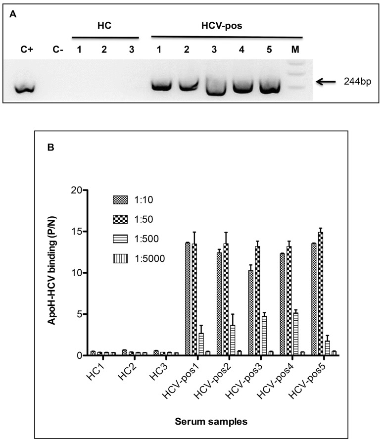 Binding between ApoH and Hepatitis C virus-related particles. Sera from both five <t>HCV-positive</t> patients (HCV-pos) and three HCV-negative healthy controls (HC) were assayed for viral detection. (A) <t>RT-PCR</t> detection of HCV from 20-fold diluted sera, after the viral capture by ApoH-coated beads. Lanes M, C+ and C- respectively correspond to the DNA molecular mass marker (1 Kb Plus DNA Ladder), the positive control (pGEM-T easy with an HCV/PCR-insert) and the negative extraction control. (B) ApoH-ELISA immunoassay to detect HCV-related particles binding from serially-diluted sera. Aliquots from the same sera as used for RT-PCR were 10, 50, 500, and 5,000-fold diluted and subsequently detected with the anti-HCV/E2 MAb.