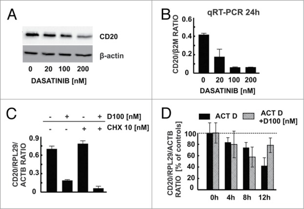 Dasatinib modulates CD20 levels at a transcriptional level. ( A ) Western blotting analysis of CD20 and β-actin in protein extracts from Raji cells pre-incubated for 48 h with increasing concentrations of dasatinib. ( B ) cDNA from Raji cells pre-incubated for 48 h with increasing concentrations of dasatinib was used for qRT-PCR amplification of CD20 and B2M products with corresponding probes labeled with FAM and DABCYL. ( C ) cDNA from Raji cells pre-incubated for 24 h with dasatinib (100 nM) and/or cycloheximide (10 nM) was used for qRT-PCR amplification of CD20, RPL29 and ACTB products. ( D ) In actinomycin D chase mRNA decay assay cDNA from Raji cells pre-incubated for 24 h with dasatinib (100 nM) and/or actinomycin (10 μg/ml) was used for qRT-PCR amplification of CD20, RPL29 and ACTB products. Shown is one representative of at least 3 independent experiments.