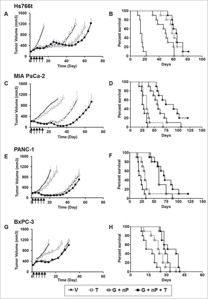 Antitumor efficacy of TH-302 (T) in combination with gemcitabine (G) and nab-paclitaxel (nP) in 4 PDAC xenograft models: Hs766t ( A and B ), MIA PaCa-2 ( C and D ), PANC-1 ( E and F ) and BxPC-3 ( G and H ), n = 10 for each group. T was given at 50 mg/kg, ip, G was given at 60 mg/kg ip and nP was given at 30 mg/kg, iv; all drugs were dosed at a Q3Dx5 regimen. A , C , E , and G , tumor growth was monitored and quantified twice a week. Data represent Mean ± SEM. B , D , F and H , Kaplan-Meier analysis plot using tumor size of 1000 mm 3 as end-point. V, vehicle; Arrow, dosing time.