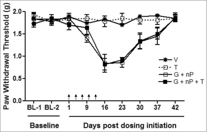 Effect of TH-302 (T) in combination with gemcitabine (G) and nab-paclitaxel (nP) on mechanical hyperalgesia, analyzed by von Frey Assay. T was given at 50 mg/kg, ip, G was given at 60 mg/kg ip and nP was given at 30 mg/kg, iv; all drugs were dosed at a Q3Dx5 regimen. Data represent Mean ± SEM of 10 male CD-1 mice each group. Arrow, dosing time.