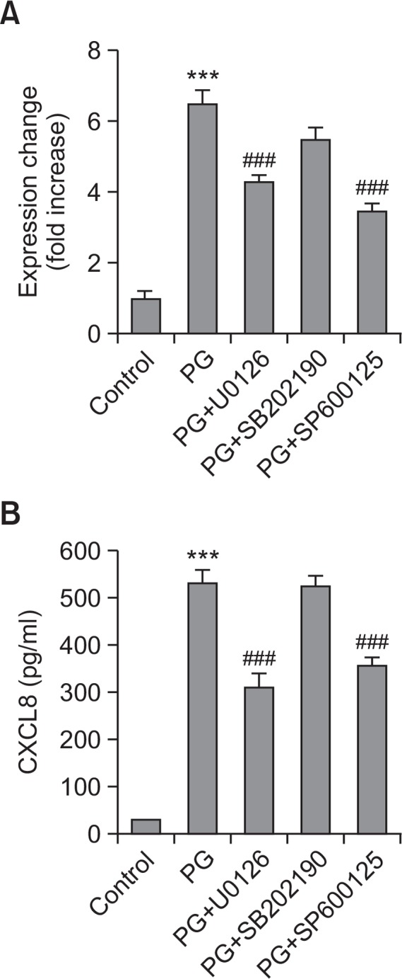 The effects of MAPK inhibitors on PG-induced CXCL8 expression. (A) THP-1 cells were treated with medium alone (control) or pre-incubated for 2 hr in the absence or presence of U0126, SB202190 or SP600125 (10 μM each) and stimulated for 6 hr with PG (1 μg/ml). Transcript of il8 gene was quantified by realtime PCR. Data are expressed as mean±SD (n=3 replicates for each group). *** p