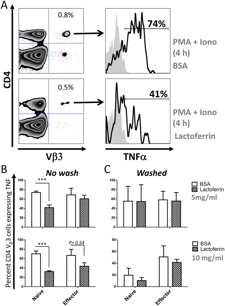 Lactoferrin significantly inhibits early intracellular TNF synthesis in naïve over that made by effector T cells. ( A ) Splenocytes from naïve mice were incubated with lactoferrin or BSA (5 mg/ml), in the presence of BFA and stimulated with or without PMA + Ionomycin for 4 h at 37°C. Cells were stained for CD4 and TCR Vβ3, fixed, permeabilized and stained for intracellular TNF. Representative dot plots show the gating strategy. The percentage of SEA-specific T cells: CD4 + Vβ3 + , is indicated in top right quadrant (left panels) and the percentage of those cells producing TNF is indicated as histograms in the right panels. ( B ) The mean percentage +/- standard error of the mean of CD4 + Vβ3 + cells producing TNF from 3 independent biological replicates was analyzed as described in A is shown. Hence, naïve and effector splenocytes were obtained as described in the legend of Fig 6 . One set of cells were directly incubated with lactoferrin or BSA in the presence of BFA and PMA + Ionomycin ( No wash , left panels) and stained as described in A . Another set of cells ( Washed , right panels) was first incubated for 3 h with lactoferrin or BSA, washed 4 times as described in legend of Fig 6c and then stimulated with or without PMA + Ionomycin for 4 h at 37°C. Data are combined from 3 experiments with n = 3 and displayed as mean +/- standard error of the mean. Statistical significance between BSA and lactoferrin was evaluated by two-tailed Student's t tests. * p