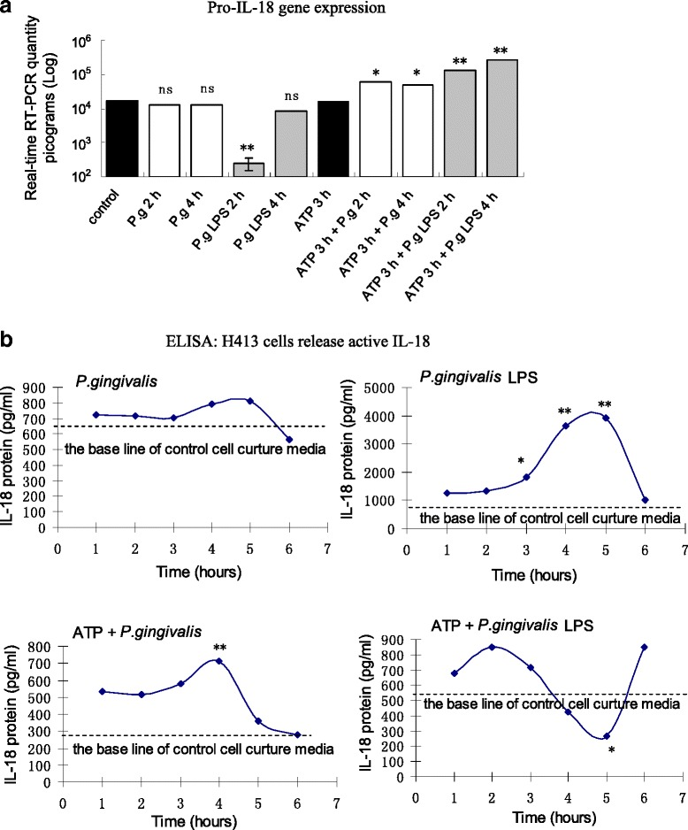 a Changes in pro-IL-18 mRNA levels in H413 cells with different treatments of P. gingivalis LPS stimuli and ATP plus P. gingivalis infection or P. gingivalis LPS. b ELISA data showing mature IL-18 protein released from H413 cells after different treatments. * P