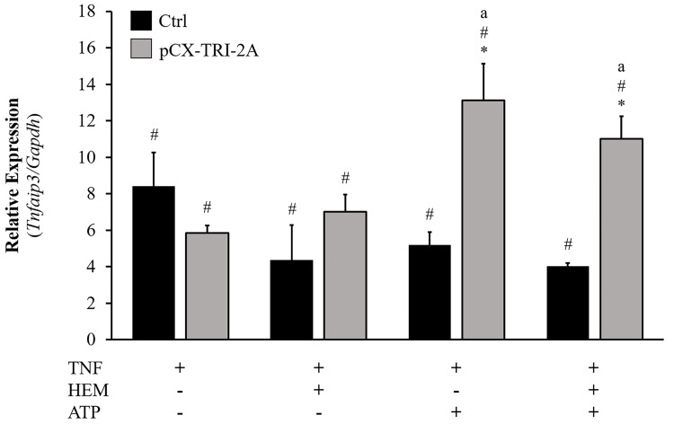 Changes in Tnfaip3 ( A20 ) mRNA expression in control (Ctrl) and pCX-TRI-2A-transfected cells. Cells were incubated with 50 ng/ml TNF-α for 16h, alone or in combination with 20 μM hemin and/or 200 μM ATP. Murine Tnfaip3/A20 mRNA was quantified by real-time PCR. Data (mean±SD of three independent experiments) are normalized for Gapdh gene and expressed as fold change respect to the untreated cells. [*] indicates a significant difference between pCX-TRI-2A-transfected cells and control cells within the same treatment (t Student, p