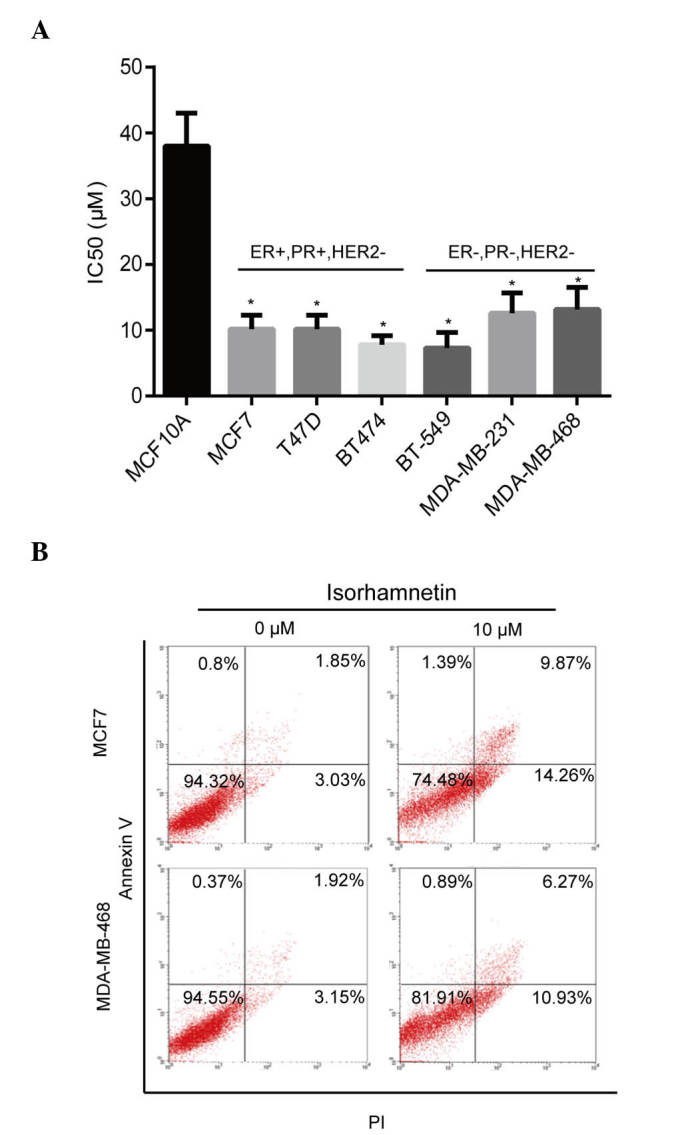 Isorhamnetin inhibits proliferation and induces apoptosis of breast cancer cells. (A) The cells were treated with various concentrations of isorhamnetin for 72 h, cell proliferation was determined using a Cell Counting kit-8 (CCK-8) assay and the IC 50 was calculated. * P