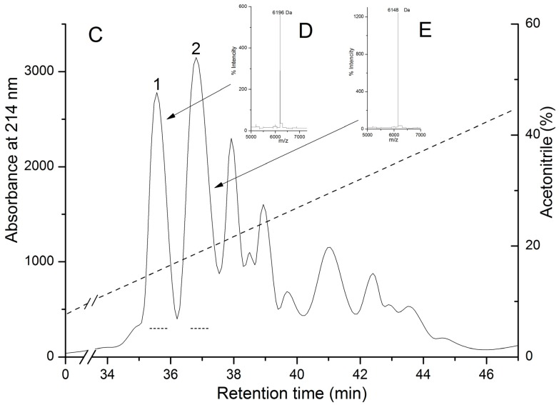 Elution profiles of H. crispa polypeptides at various stages of chromatographic purification. ( A ) Gel filtration chromatography of polypeptides contained in 80% acetone powder on column with Akrilex P-4; ( B ) Subsequent cation-exchange chromatography of active fraction polypeptides ( Figure 1 A, peak 3) on column with cellulose CM-32; ( C ) RP-HPLC performed on Nucleosil C 18 column of polypeptides ( Figure 1 B, peak 4) desalted on an Akrilex P-4 column. Fraction with hemolytic and trypsin inhibitory activities are accentuated by solid and dotted lines, respectively. MALDI-TOF/MS spectrums and molecular masses of HCRG1 ( D ) and HCRG2 ( E ) after RP-HPLC are shown in the inset. Chromatography conditions are described in the Experimental Section (Methods).