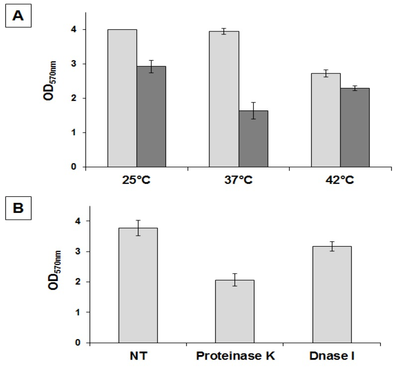 Determination of amount of biofilm produced by B. pumilus SF214. ( A ) Cells were grown at the indicated temperatures in rich (LB; light gray bars) or sporulation-inducing (DS; dark gray bars) media for 48 h. Cells were then removed, wells were stained and washed, and the OD (570 nm) was determined. ( B ) Biofilm formation at 25 °C in LB medium supplemented with proteinase K or DNase I, as previously indicated [ 14 ].