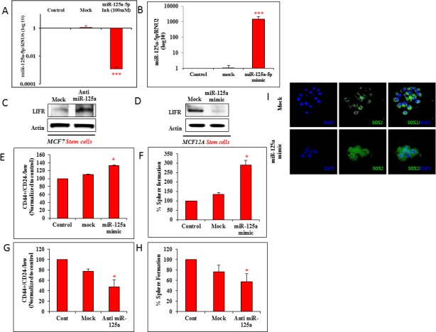 miR-125a modulation affects malignant and non-malignant breast epithelial stem cells A. qRT-PCR data shows effective inhibition of miR-125a in MCF7 cells using 100nM of antagomirs. B. qRT-PCR data shows effective over expression of miR-125a in MCF12A cells with miR-125a mimic. C. Immunoblotting analysis for LIFR post miR-125a inhibition in MCF7 CSCs. D. Immunoblotting analysis for LIFR in miR-125a over expressing MCF12A stem cells. E. Flow cytometric analysis shows increased percentage of stem cells with miR-125a over expression in MCF12A cells. F. Sphere forming assay demonstrates higher percentage of 3D sphere forming cells in miR-125a over expressing MCF12A. G. Flow cytometric analysis shows decreased percentage of stem cells with miR-125a inhibition in MCF7 cells. H. Sphere forming assay demonstrates lower percentage of 3D sphere forming cells in miR-125a inhibited MCF7 cells. I. Immunostaining of MCF12A spheres for SOX2 expression with over expression of miR-125a compared to mock controls.