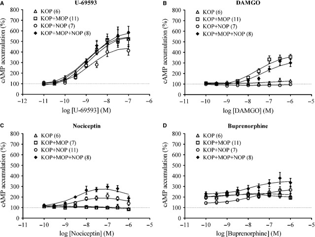 Naloxone precipitation on the effects of chronic exposure to U-69593, DAMGO, nociceptin or buprenorphine on forskolin-induced cAMP accumulation in HEK 293 cells expressing KOP, KOP+MOP, KOP+NOP and KOP+MOP+NOP receptors. After exposure to U-69593 ( A ), DAMGO ( B ), nociceptin ( C ) or buprenorphine ( D ) for 4 hrs at 37°C, the incubation media were subsequently removed, and HEK 293 cells expressing KOP ( open triangle ), KOP+MOP ( open square ), KOP+NOP ( open circle ) or KOP+MOP+NOP ( filled diamond ) were treated with 1 μM naloxone accompanied by 10 μM forskolin immediately prior to HTRF cAMP assays. Each point represents the mean ± SE value of six to eleven (numbers indicated in the parentheses) experiments performed in duplicate using different batches of cells. 100% defines forskolin-stimulated cAMP accumulation in cells treated with none of the aforementioned drugs.