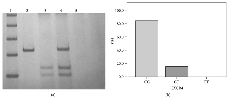 CXCR4 rs2228014 (C/T) genetic polymorphism. (a) Electrophoretic profile of rs2228014 (C/T). BccI restriction enzyme was used for 4 h at 37°C. Polyacrylamide gel 10% stained with silver nitrate. Lane 1, Ladder DNA fragment marker of 100 bp; Lane 2, PCR product of 236 pb; Lane 3, wild-type homozygous genotype of 133 pb and 103 pb (CC); Lane 4, heterozygous genotype of 236 pb, 133 pb, and 103 pb (CT); Lane 5, blank reaction or negative control (reaction without DNA). (b) Genotype distribution for CXCR4 rs2228014 in breast cancer patients.