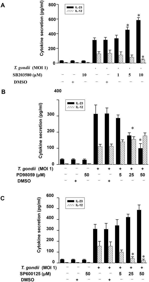 Differential regulation of IL-23 and IL-12 productions in T . gondii -infected THP-1 cells upon pretreatment with specific inhibitor of p38 MAPK, ERK1/2 or JNK. The p38 inhibitor (SB203580), ERK inhibitor (PD98059), or JNK inhibitor (SP600125) was added to THP-1 cells at the concentrations indicated at 1 h before infection with T . gondii . The culture supernatants were harvested after 18 h for cytokine assessment using ELISA. The IL-23 and IL-12 levels following stimulation with T . gondii with or without the presence of p38 MAPK inhibitor (A), ERK1/2 inhibitor (B), or JNK inhibitor (C) are shown. The solvent control was 0.1% DMSO. One representative experiment performed in triplicate is shown.* P