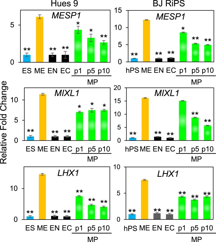 QPCR analysis of MP cells derived from Hues 9 and BJ RiPS for expression of mesodermal markers MESP1 , MIXL1 , and LHX1 . Expression of these markers in MP cells at passages 1, 5 and 10 is comparable to that observed in ME and higher than in ES, EN and EC. All statistical comparisons are made to the ME sample. *p