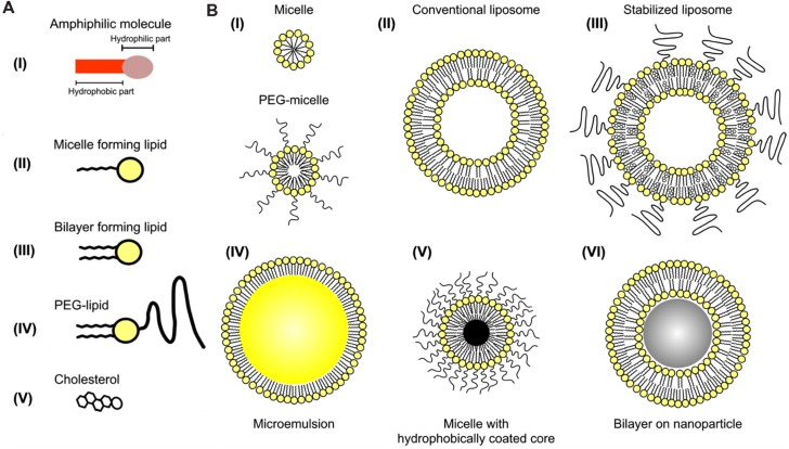 Iodine-containing nanoparticles. (A) Representation of individual amphiphilic lipids that can be incorporated into nanoparticles. (B) Representation of several configurations of self-assembling nanoparticles based on amphiphilic lipids. Iodine can be incorporated into the hydrophobic portion of the micelle, within the non-polar core of an emulsion, or within the aqueous core of liposomes. Reprinted with permission from ( Mulder et al., 2006 ).