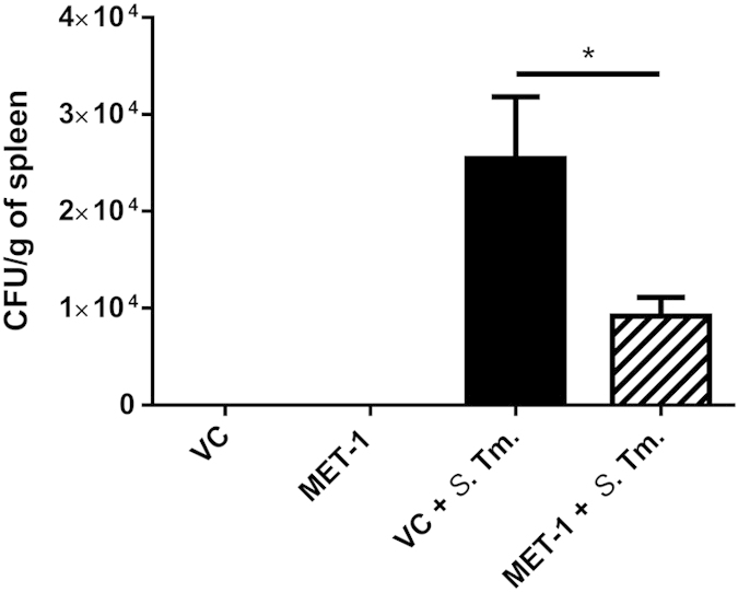 Translocation of S. typhimurium to the spleen was reduced in MET-1 pretreated mice. Spleens were harvested 48 hours after S. typhimurium infection, weighed, and homogenized in 1 mL PBS. Serial dilutions were plated on MacConkey agar plates containing 100 μg/mL streptomycin. Plates were incubated at 37 °C for 24 hrs, and the resulting colonies were counted. Infected mice pretreated with MET-1 (MET-1 + S . Tm., n = 13) had reduced S. typhimurium counts in the spleen (*p