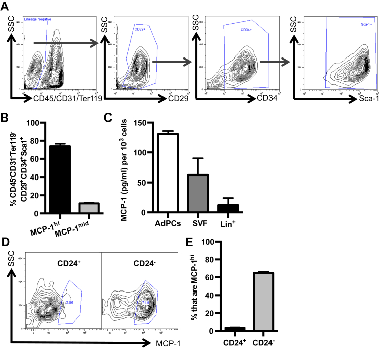 Committed CD45 − CD31 − CD29 + CD34 + Sca-1 + CD24 − AdPCs express and secrete high levels of MCP-1 . Epididymal VAT from 8 to 10 week old C57BL/6J mice was harvested and processed for SVF cells. (A, B) Flow cytometry analysis of CD45 − CD31 − Ter119 − CD29 + CD34 + Sca-1 + AdPCs with representative flow plot (A) and the percentage (B) of AdPCs with MCP-1 hi and MCP-1 mid expression. n = 6 (C) MCP-1 levels as measured by ELISA in the supernatant of equivalent numbers of sort purified AdPCs, total SVF, and Lin + (CD45 + /CD31 + /Ter119 + ) cells. n = 3, each group including 6–8 mice pooled. (D, E) Analysis of MCP-1 hi cells in CD24 + and CD24 − AdPCs with representative plots (D) and quantitation (E) of MCP-1 intracellular staining. n = 15. Shown are mean values ± SEM.