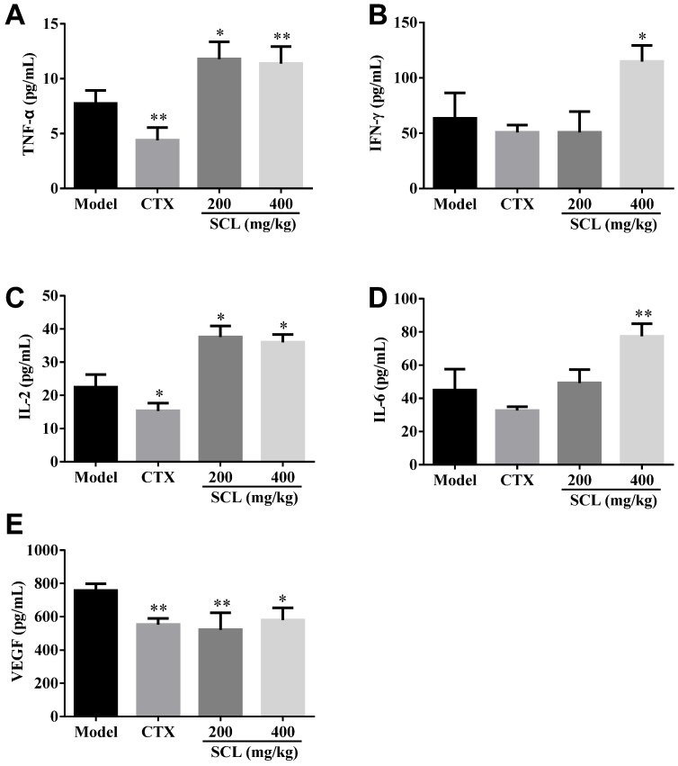 Effects of steamed C . lanceolata (SCL) on the levels of serum cytokines, including tumor necrosis factor-α (TNF-α) ( A ), interferon-γ (IFN-γ) ( B ), interleukin-2 (IL-2) ( C ), interleukin-6 (IL-6) ( D ) and vascular endothelial growth factor (VEGF) ( E ) in H22 tumor-bearing mice. All data were expressed as the mean ± standard deviation (SD), n = 10. * p