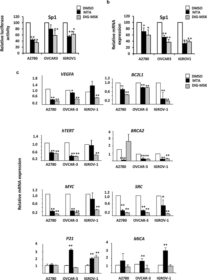 DIG-MSK regulates the expression of SP1 and key oncogenic genes in ovarian tumor cells. (a) Relative changes in luciferase activity of a transfected Sp1-reported vector in the presence of 200 nM MTA or DIG-MSK compared to untreated ovarian cancer cells. qRT-PCR analysis of the expression of SP1 gene and several key Sp1-regulated oncogenic genes in ovarian cancer cells treated or untreated with 200 nM MTA or DIG-MSK. Data represent the mean ± SEM of Ct values obtained from at least three independent experiments made by duplicate. The relative mRNA expression was obtained by comparison of the expression profiles of untreated cells (DMSO) versus treated ones (*p