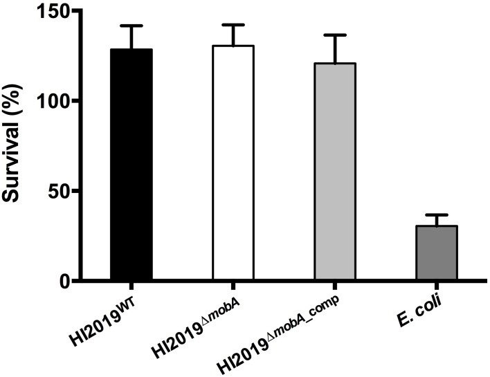 Neutrophil-dependent killing of HI2019 strains and E. coli Dh5α . Neutrophils (2 * 10 ∧6 cells/mL) were incubated with 1:10 HI2019 WT , HI2019 Δ mobA , and HI2019 Δ mobA _comp strains and after 2 h of incubation, viable bacteria were measured by CFUs counting as described in Materials and Methods. Values shown are % viable bacteria at 2 h compared to the initial inoculum. E. coli Dh5α cells were used as a control.