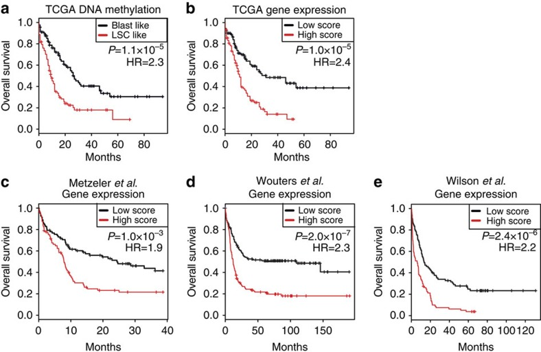 The LSC epigenetic signature is associated with overall survival in human AML. ( a ) TCGA samples were classified as LSC like or Blast like based on DNA methylation alone by generating methylation profiles of the LSC and Blast populations, and then calculating scores of each sample based on the probability of being closer to either LSC or Blast. Kaplan–Meier survival analysis was then applied to these groups as indicated. Statistical significance was determined by the log-rank test ( n =192; 93 LSC-like and 99 Blast-like patients). ( b – e ) Expression of the LSC epigenetic signature genes was combined to create an LSC score, which was then calculated in AML samples. The first principal component of genes in the LSC signature was computed, and patients were stratified as 'high' or 'low' relative to its median value in four independent cohorts including TCGA ( n =182; 91 high-score and 91 low-score patients), ( b ) Metzeler et al . ( n =163; 81 high-score and 82 low-score patients) ( c ), Wouters et al . ( n =262; 131 high-score and 131 low-score patients) ( d ) and Wilson et al . ( n =169, 84 high-score and 85 low-score patients) ( e ). In each cohort, patients were classified into high and low groups based on the median value. Kaplan–Meier survival analysis was then applied to these groups as indicated. Statistical significance was determined by the log-rank test.