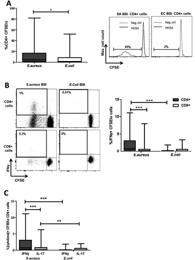 Human S . aureus bloodstream infection induces S . aureus antigen-specific Th1 cells. PBMCs were isolated from patients, CFSE-labelled and incubated with heat-killed S . aureus PS80 strain (1μg/ml ≈ 1x10 7 CFU/ml) or media alone for 10 d before assessing S . aureus antigen-specific proliferation by gating on CFSE lo cells of the CD4 + population using flow cytometry (A). S . aureus antigen-specific Th1 and cytotoxic T cell division was assessed by gating on CFSE lo IFNγ + cells of the CD4 + and CD8 + populations respectively (B). S . aureus antigen-specific Th1 and Th17 proportions were compared by gating on CFSE lo IFNγ + or IL-17A + cells in the CD4 + population (C). For each patient, media only responses were subtracted from responses to heat-killed S . aureus to determine the antigen-specific response. Results shown as box-and-whiskers plots where the horizontal line indicates the median, boundaries of the box indicate the IQR, and whiskers indicate the highest and lowest values of the results, and representative FACS plots of CD4 + or CD8 + lymphocytes (A, B). n = 5–17 per group. SA = S . aureus , EC = E . coli , BSI = bloodstream infection. *p