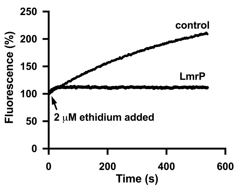 LmrP expressing cells show reduced accumulation of ethidium compared to control cells. The substrate accumulation experiments described in Fig 1A were performed with ethidium at a final concentration of 2 μM. Traces represent data obtained in three independent experiments using different batches of cells.