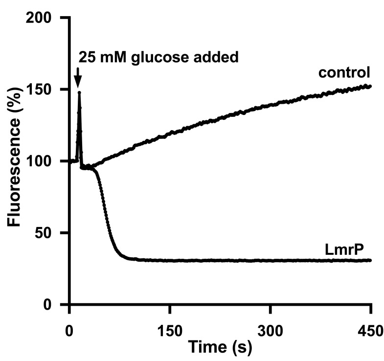 LmrP mediates active efflux of ethidium. The efflux experiments described in Fig 3 were performed with ethidium at a final concentration of 2 μM. Traces represent data obtained in three independent experiments using different batches of cells.