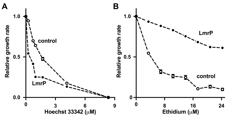 LmrP mediates cellular sensitivity to Hoechst 33342 but resistance to <t>ethidium.</t> Growth rate of LmrP-expressing lactococcal cells and cells without LmrP expression (control) in the presence of up to 8.4 μM Hoechst 33342 (A), or up to 24 μM ethidium (B) was determined relative to the maximum growth rate in the absence of drug. The error bars for some of the data points were too small to be displayed, and are hidden behind the data point symbols.