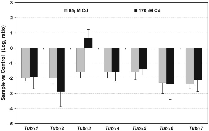 Relative expression of gene encoding α-tubulin isotypes . Fold change evaluated through real time PCR after moderate (85 μM Cd) and high (170 μM Cd) metal treatment. Values shown in the histogram are represented as a log 2 fold change compared to the control sample average of 0 (untreated seedlings). The results represent the mean (+SE) of three separate experiments.